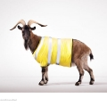 Mountain-Goat-o