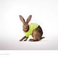 The-Hare-o