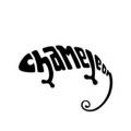 040-chameleon